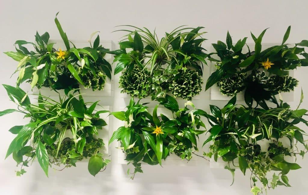 Decoración Plantas Photocall