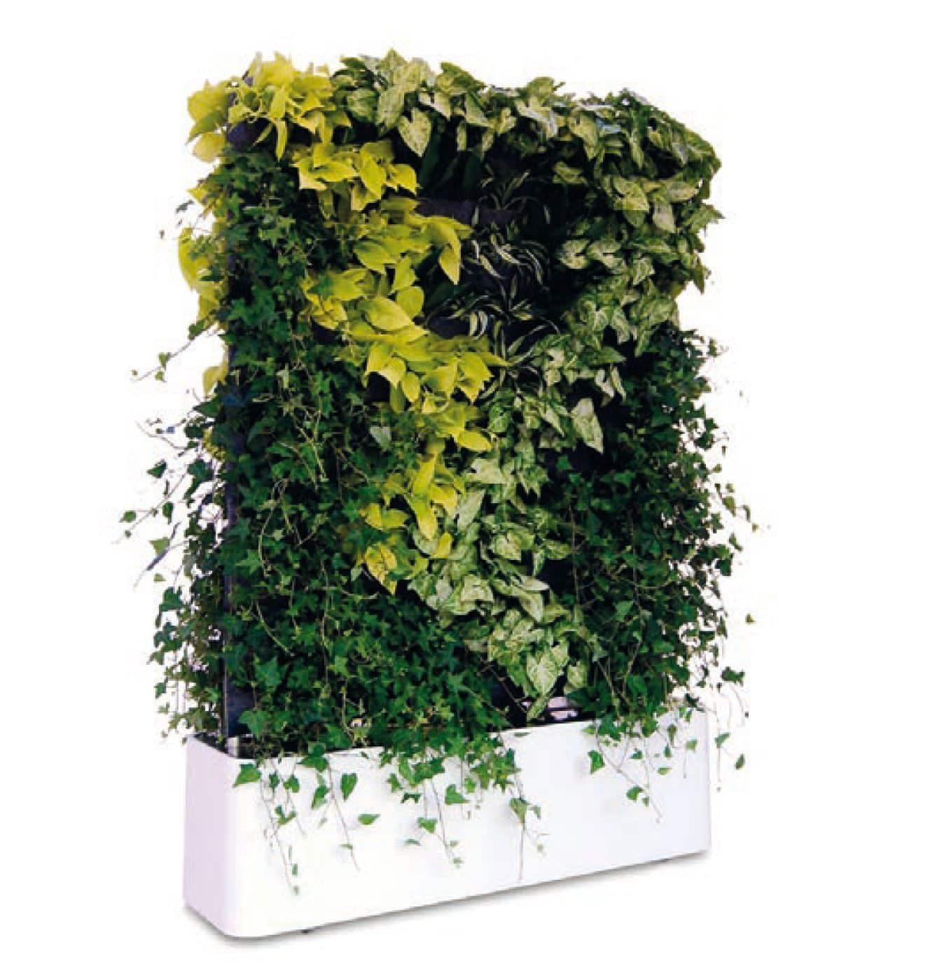 separador de planta viva